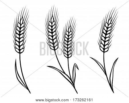 isolated black wheat ears on white background
