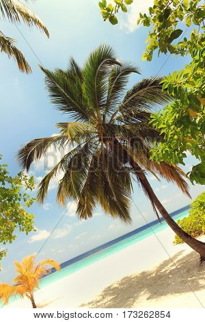 Beautiful low growing palm on sea shore. Relaxing beach view framed with tropical trees. Vertical, Toned.
