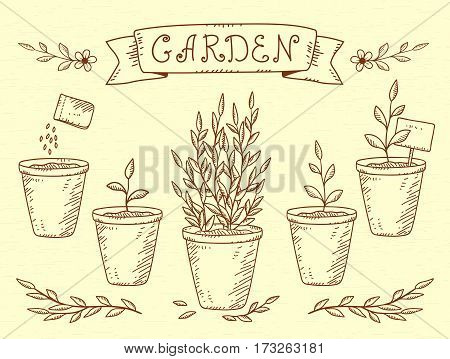 hand drawn vintage set of botanic growing plants in pots