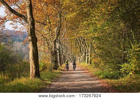 MAINAU, BADEN- WURTTEMBERG / GERMANY - OCTOBER 29, 2016: Cyclists riding on the plane tree alley in autumn
