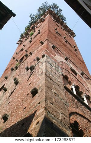 Lucca, Italy - 14 June 2014: The tower of Guinigi at Lucca on Italy