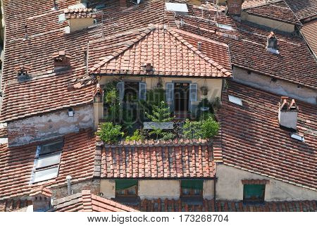 Overview At The Old Part Of Lucca