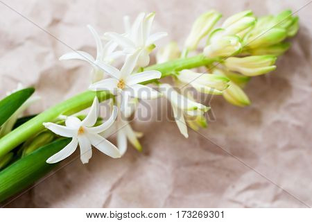Spring frame with flowers of Hyacinth close up on kraft paper, rustic style. Delicate floral background. For romantic pattern, wallpaper or banner design. Place for your text