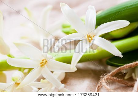Close-up of hyacinth gentle flowers. Spring delicate floral romantic background, selective focus. Spring, gardening, tenderness, purity, wedding concept.