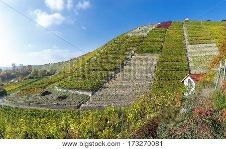 In the vineyards in autumn, taken at the river Neckar near Besigheim, Germany.