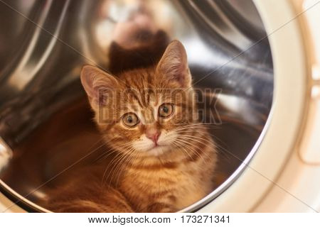 little red-headed cat sitting in a washing machine