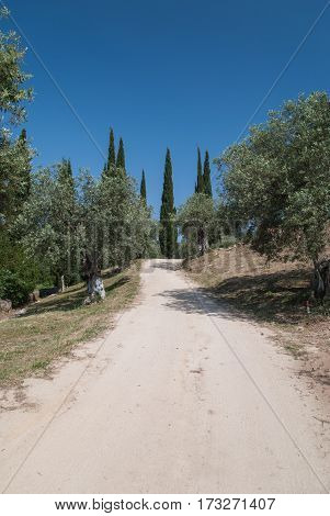 Dirt road through mediterranean countryside between olive and cypress trees with deep blue sky