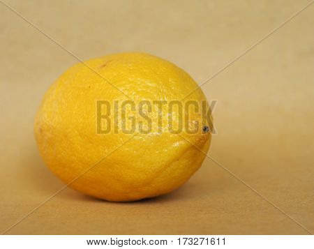 Lemon Fruit Food With Copy Space