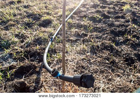 The initial part of the hose drip irrigation with cap and thread for drip irrigation of young fruit trees. One fruit tree from which the water-hose for drip irrigation.