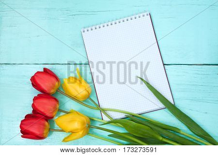 Amazing Blank Card for Easter March 8 valentines day mothers day. Red and yellow tulips on wooden light blue background with Notepad. Top view Flat lay.