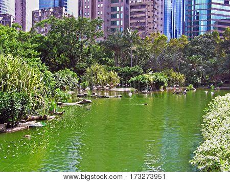 Pond at Kowloon Park in Hong Kong