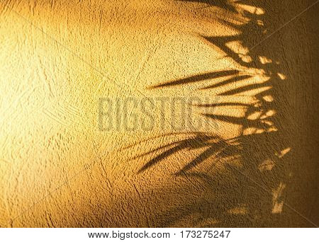 Leaves shadow on a wall
