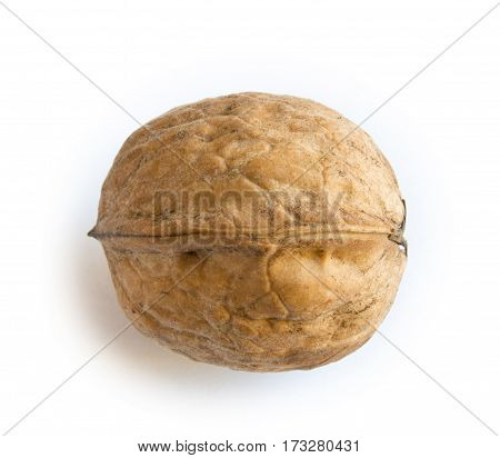 one walnut on white ackground close up