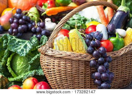 Fruits and vegetables like tomatoes, eggplants, corns and grapes arranged in a group. Natural still life for healthy food.