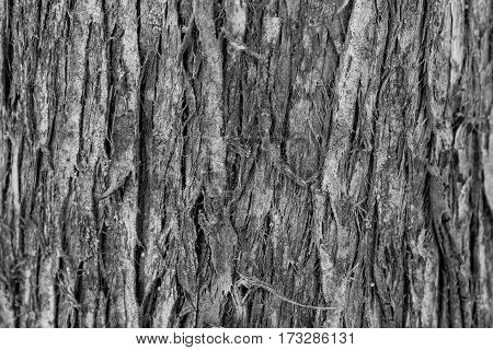 Background The Bark Of An Old Tree