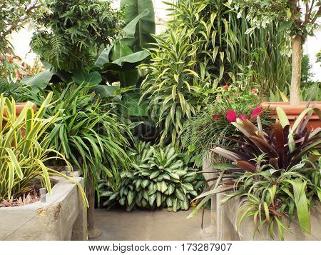 Large variety of tropical hot house plants.