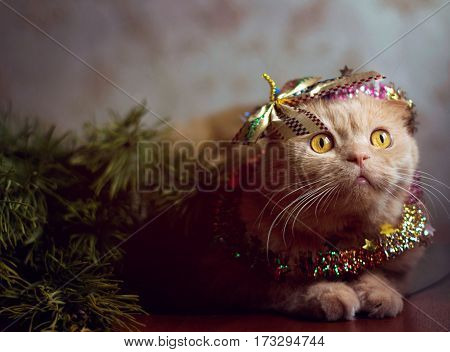 Beautiful cat in the garland lies about branches of spruce