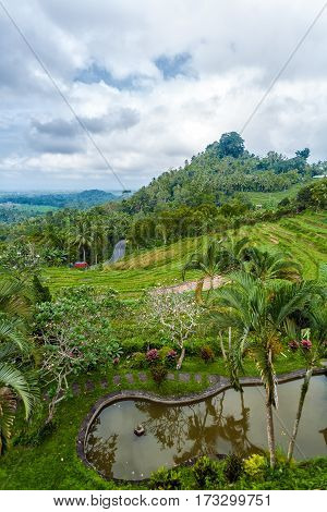 Bali, Indonesia - August 27, 2008: Traditional Village With Rice Field In Jungle