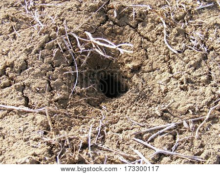 Mouse hole in the field and snake hole in the field