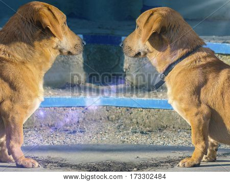 Two very similar dogs looking at each other