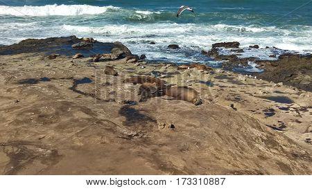 Seals on the shore of La Jolla Cove.