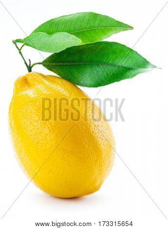 Ripe lemon fruit with leaves on the white background.