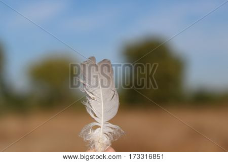 pluma de ave enfocada con fondo de arboles.