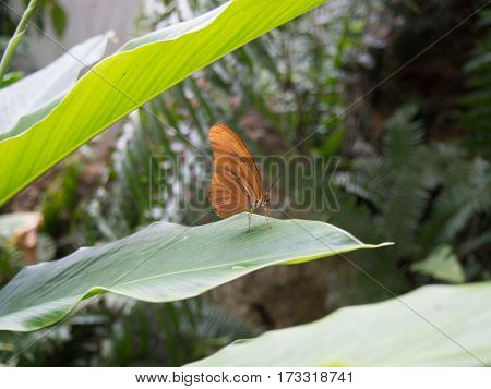 Butterfly Landing on a Leaf in the Butterfly Museum in Downtown Fort Myers Florida