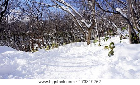 Snow And Walkway In The Forest Noboribetsu Onsen Snow Winter Park