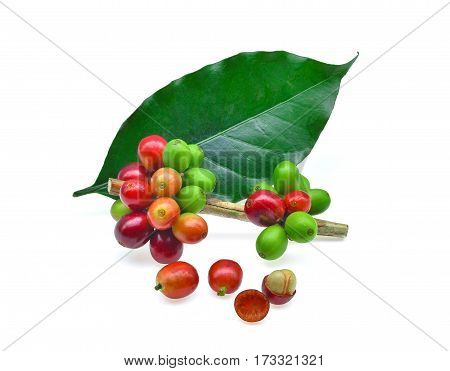 coffee grains and leaves isolated on white background