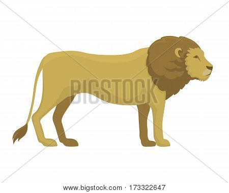 Lion wild animal vector illustration. Zoo wild cartoon graphic african design mascot. Safari fur feline big cartoon mamma. Wildlife character jungle.