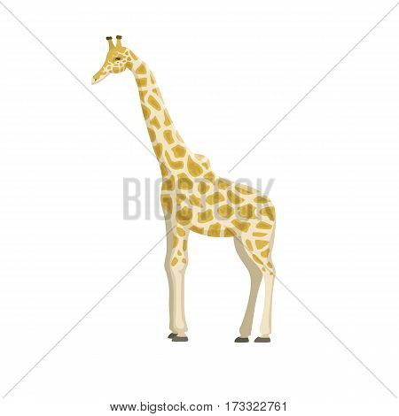 Giraffe cartoon vector illustration. Wild mammal safari slim neck zoo animal. Savanna portrait wilderness beautiful horned tropical mammal standing with long neck.