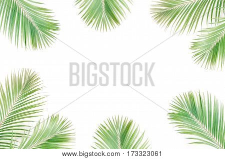 Tropical exotic palm branches frame isolated on white background. Flat lay top view mockup.