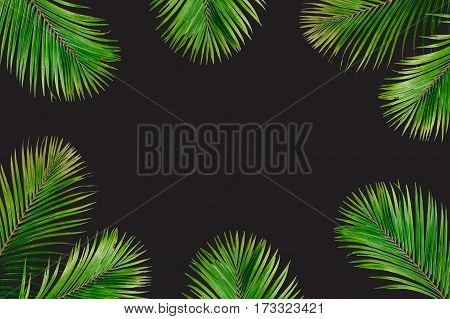 Tropical exotic palm branches frame isolated on black background. Flat lay top view mockup.