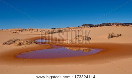 Perfect reflection of sand dunes in calm water. Coral Pink Sand Dunes State Park. Kanab. Cedar City. Utah. United States.