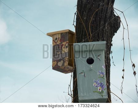 Empty birdhouses on a tree against the blue sky outdoor cropped shot