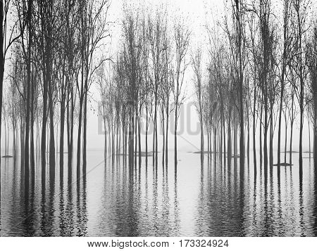 An image of a beautiful forest with fog in bavaria germany