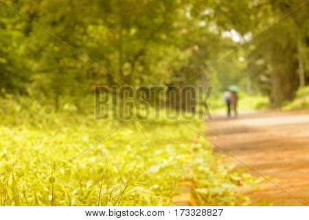 Romantic couple walking and faded away in nature conceptual stock image Kolkata West Bengal India