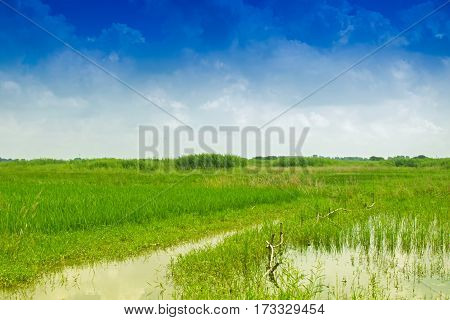 Beautiful rural landscape of Paddy field blue sky Howrah West Bengal India