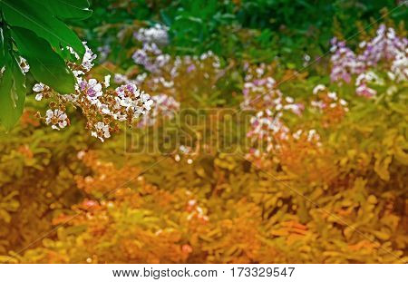 White and pink flowers with nature background Howrah West Bengal India
