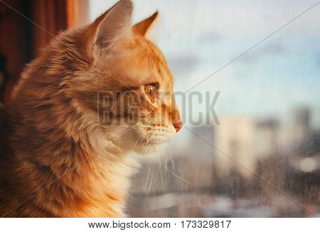red pet cat sitting on the windowsill looking out the window onto the street sunlight