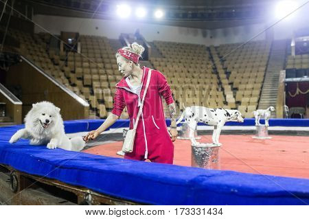 The trainer woman trains dogs in the circus in the arena. Circus rehearsal in the arena.