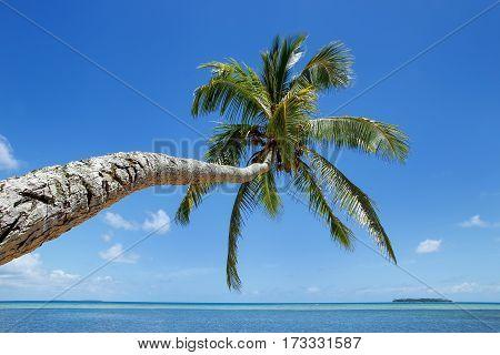 Leaning Palm Tree At Makaha'a Island Near Tongatapu Island In Tonga