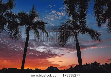Betel palm silhoette with sunset sky .