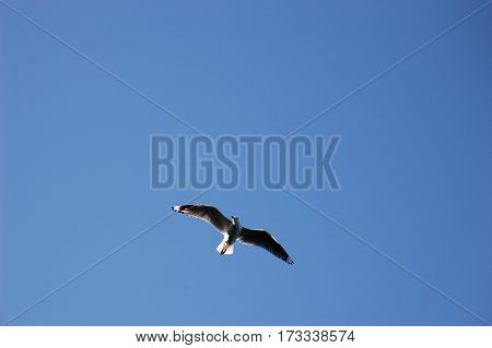 A lonely bird in a blue sky