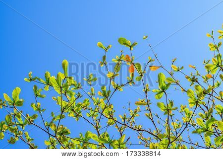 Green leaf with blue sky with morning light.