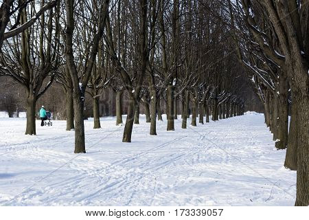 young mother wheeling a pram down the Avenue of trees snow winter