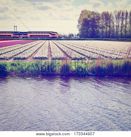 Electrified Railway between the Fields of Tulips in Netherlands Instagram Effect