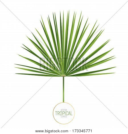 Palm leaf vector illustration. Trendy fan palm leaf isolated.