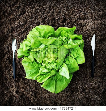 Healthy eating concept. Fork, knife and lettuce on soil .